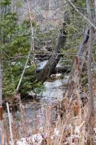20141123_Shalda_Creek