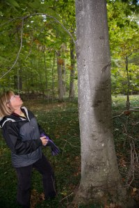 Kama_Beech_Bark_Disease