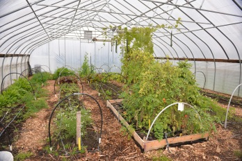 Tollgate_Greenhouse_1