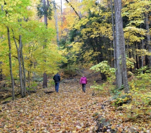 woods_hikers_small